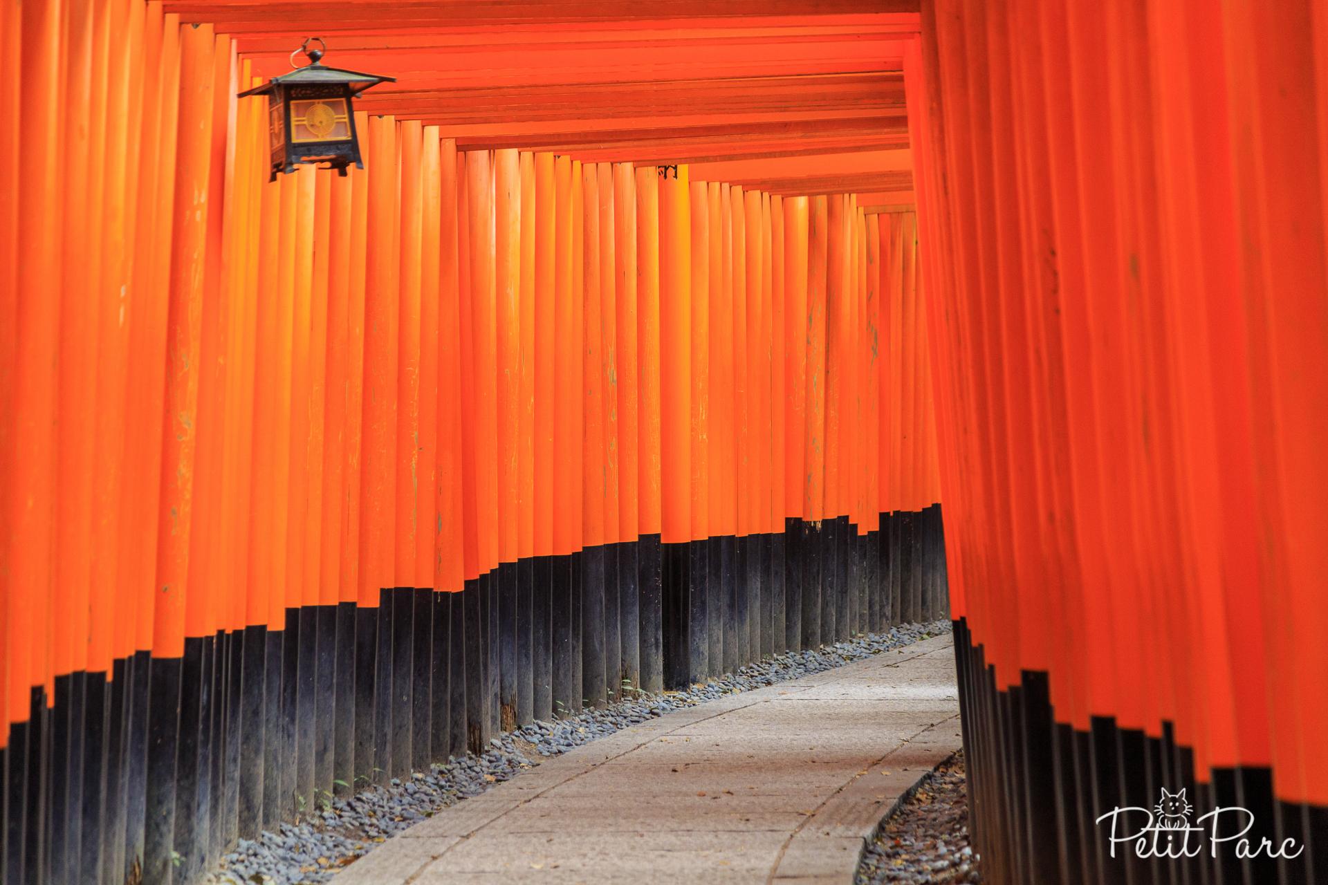 Tunnel de torii