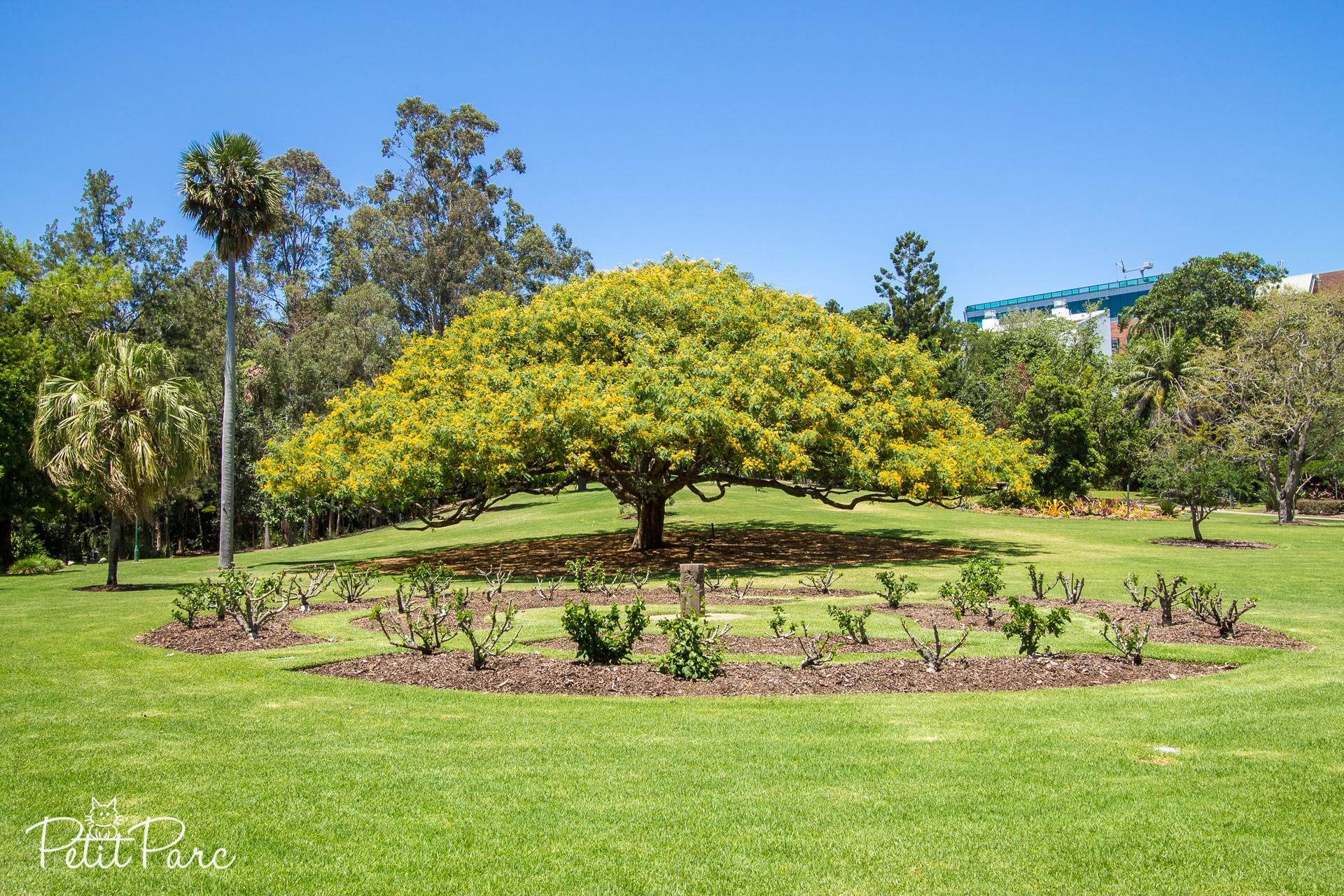 Jardin botanique de Brisbane