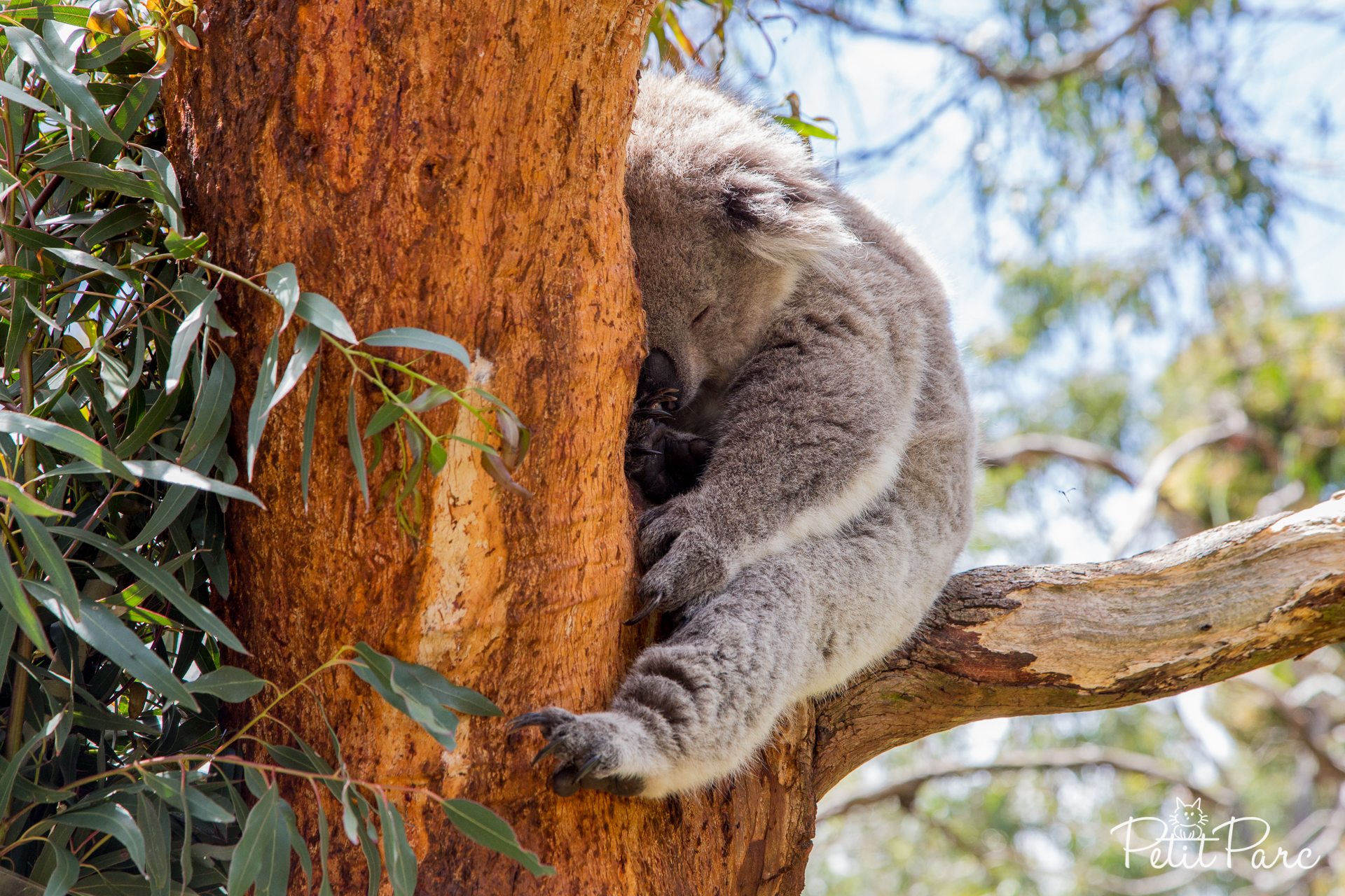 Koala Conservation Center