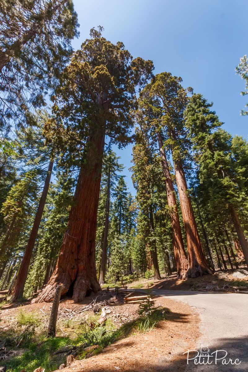 Sequoias de Mariposa Grove