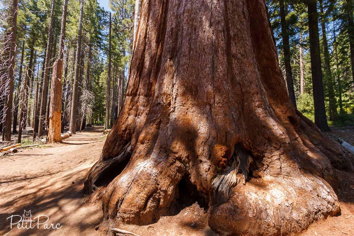 Sequoia de Mariposa Grove
