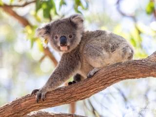 Les patients du Koala Hospital