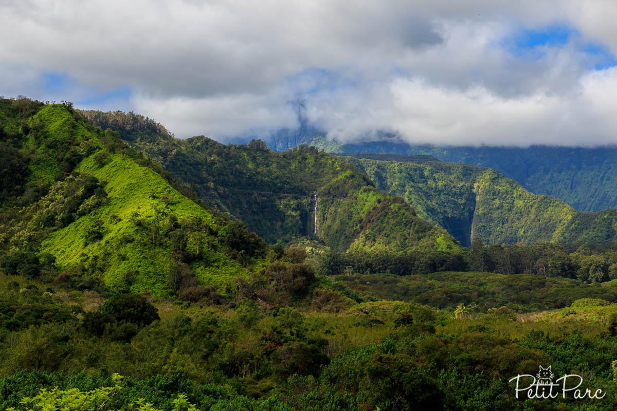 Koolau Forest Reserve