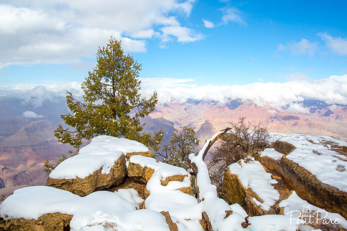 Rim Grand Canyon neige