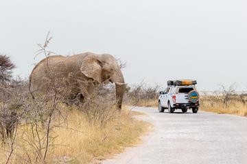 Elephant 4x4 Etosha