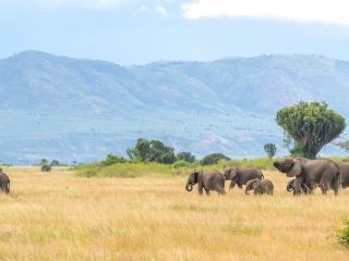 Elephants à Queen Elizabeth