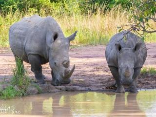 Maman rhino et son petit à Ziwa