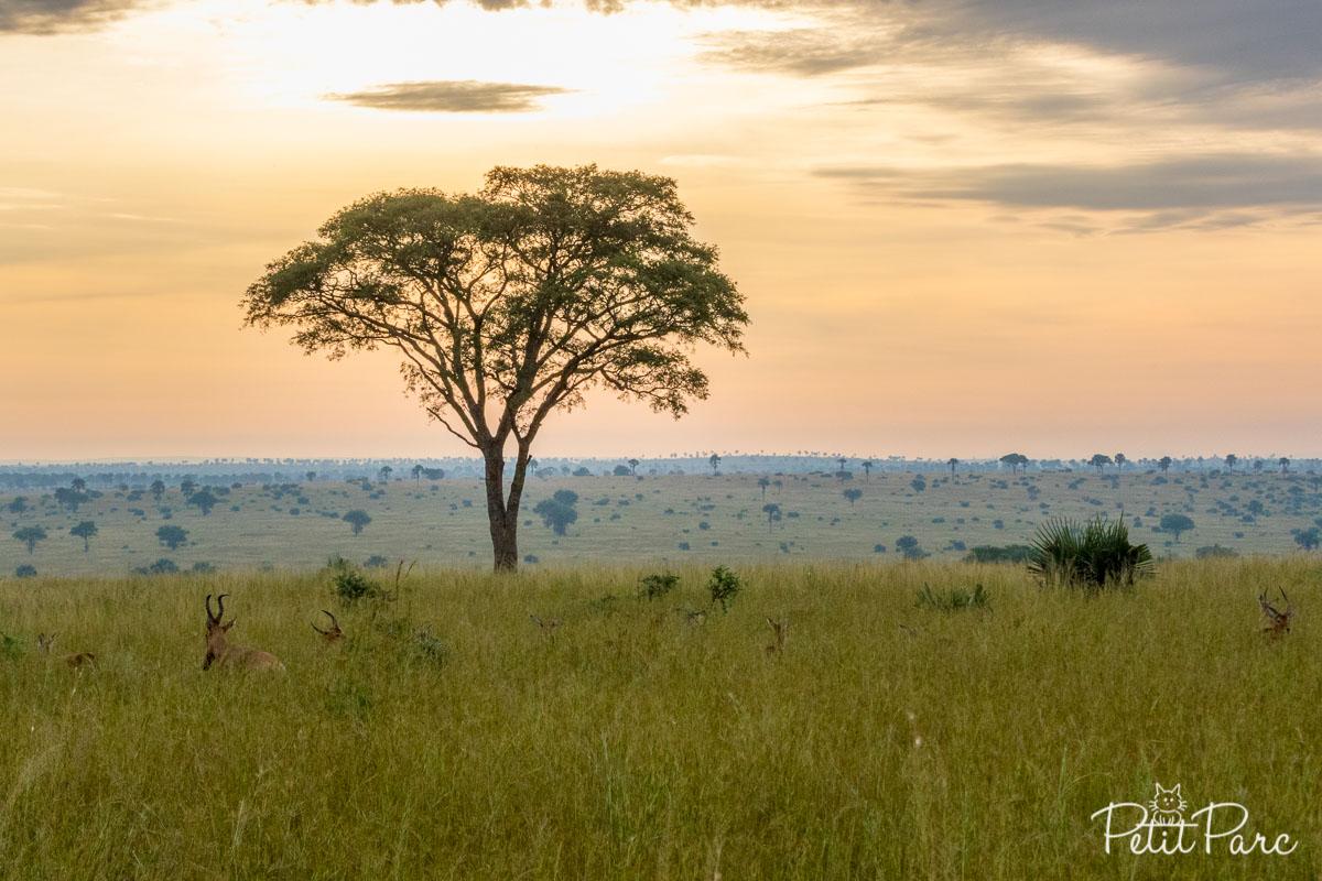 Lever de soleil à Murchison Falls